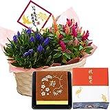 敬老の日ギフト 秋の寄せカゴ 文明堂 カステラ 花とスイーツ フラワーギフト 鉢花