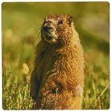 マーモット 3drose USAコロラドSan Juan山のクローズアップyellow-bellied Marmotマウスパッド( MP _ 190857_ 1)