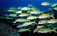 魚のグループ水中の世界 キャンバスの 写真 ポスター 印刷 旅行 風景 景色 (90cmx60cm)