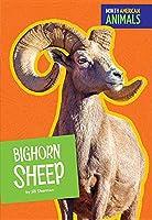 Bighorn Sheep (North American Animals)