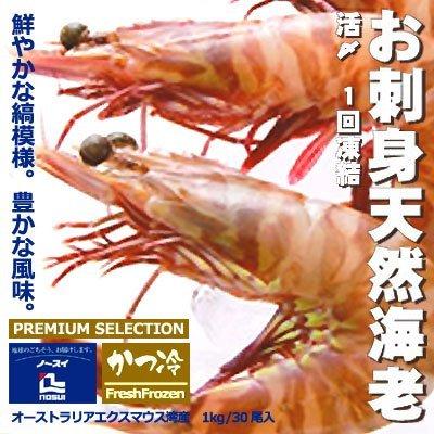 かつ冷 活〆 お刺身天然海老 1kg 30尾入 クルマエビ科 お刺身用