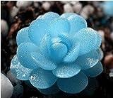 自由船40種のミニ多肉植物の種子Tetragonia青い石の花の種Lithops Pseudotruncatella種子
