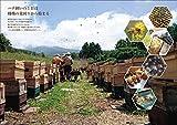養蜂大全: セイヨウミツバチの群の育成から採蜜、女王作り、給餌、冬越しまで飼育のすべてがわかる! ニホンミツバチ&蜜源植物も網羅 画像