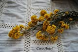 ~Coco Heart~ キバナローダンセ (木の実・ドライフラワー)