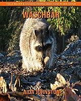 Waschbaer: Tolle Bilder & Wissenswertes ueber Tiere in der Natur