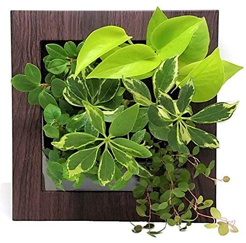 壁掛け観葉植物 ミドリエデザイン スクエア フレーム 木目調ダーク 17X4 インテリア アートパネル おしゃれ
