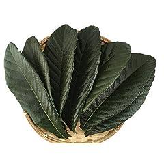 びわの葉 無農薬 生葉 20枚 10枚入×2袋