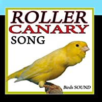 Roller Canary Song. Birds Sound