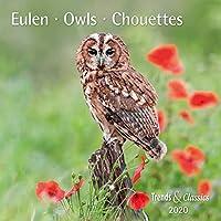 Eulen Owls 2020 - Broschuerenkalender - Wandkalender - mit herausnehmbarem Poster