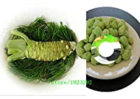 100pcs / lotワサビ種子、和菓子種子植物盆栽植物DIYホームガーデン:多色