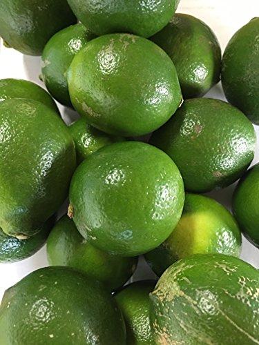 無農薬・ノーワックス 熊本産 わけありレモン3kg