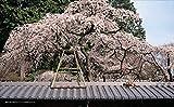 ねこの京都 画像
