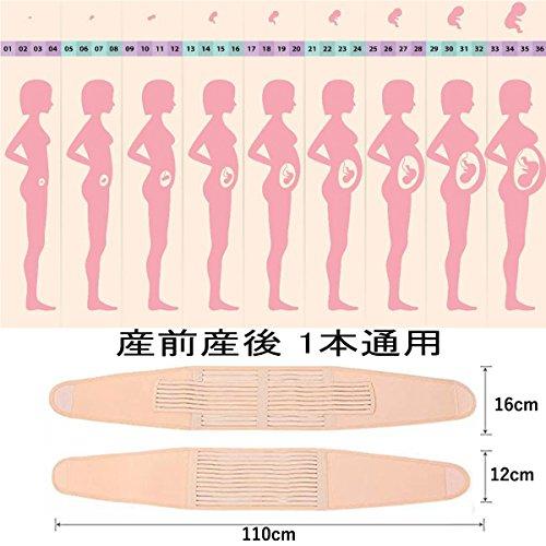 妊婦帯 腹帯としてダブルベルト 産前産後マタニティベルト 骨盤 恥骨や腰の負担をしっかりサポート で体にフィットシリーズ (ヌード色, 大きい)