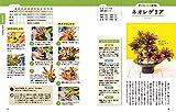 決定版 はじめての観葉植物・多肉植物 選び方と育て方 (TEXTBOOK OF GREEN) 画像