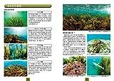 海藻―日本で見られる388種の生態写真+おしば標本 (ネイチャーウォッチングガイドブック) 画像