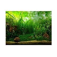 水槽 水族館 魚タンク バックグラウンド 装飾 背景 3D効果 接着シーワールド ポスター 雰囲気を作り出し 水中 海草(76 * 30cm)
