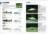 くらべてわかる 淡水魚 画像