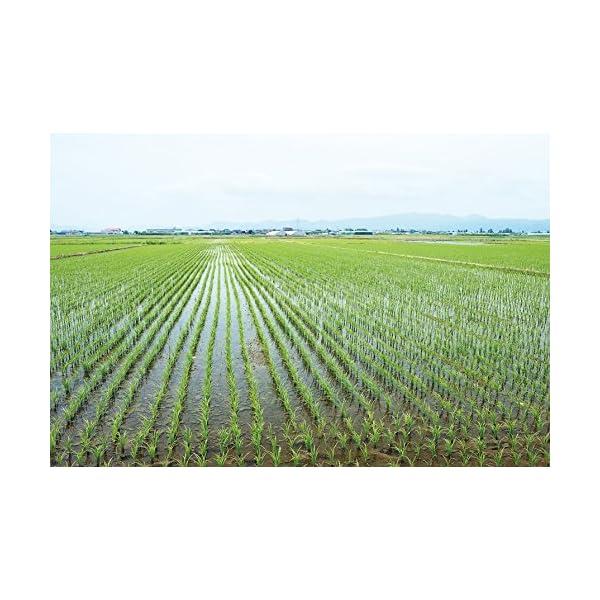 【精米】 山形県産 白米 はえぬの紹介画像3