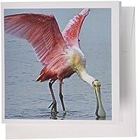 フローレン鳥間近SpoonbillピンクTropic鳥–グリーティングカード Set of 6 Greeting Cards