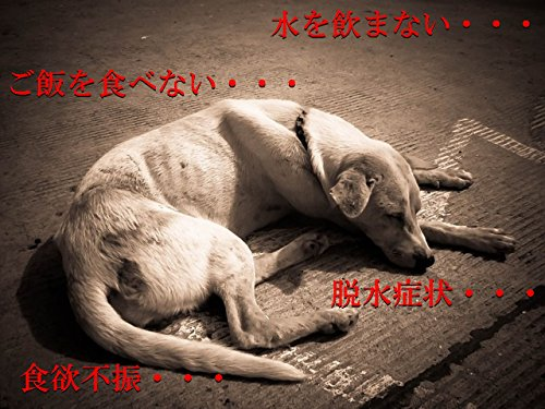 【miyabi】老犬・老猫用 給水シリンジ Mサイズ 犬猫兼用 (小~中型)水分補給・流動食用(ピンク)