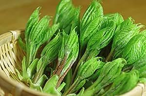 天然 山菜 コシアブラ(こしあぶら)蕾 100g 奥会津旬彩館
