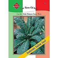 HIGH発芽SEEDSだけでなくPLANTS:トンプソン&モーガン - イタリアの味 - ケール - Palmizioキャベツ - 1500種子
