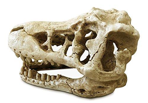 ビバリウム 【 ティラノ 】 頭部 ( ラージ サイズ ) t-rex 頭蓋骨 ティラノ 骨格 陸上 昆虫 サソリ トカゲ 荒野 砂漠 隠れ家 教材