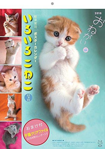 2018板東寛司 いろいろこねこ12ヵ月 猫写真壁掛けカレンダー クリアファイル付
