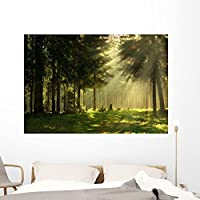 Wallmonkeys Morning Spring Forest Wall Mural by Peel and Stick Graphic (60 in W x 41 in H) WM102523 [並行輸入品]