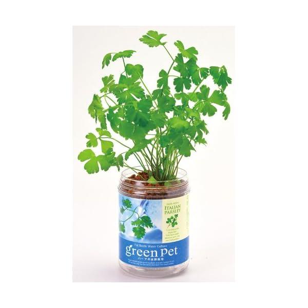 育てるグリーンペット ハーブ イタリアンパセリ...の紹介画像2