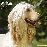 Afghan Calendar 2019