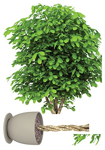 Home Decor Line Plant Wall Decals, CR-57722