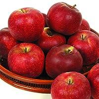 国華園 青森産 北紅 10kg1箱 りんご