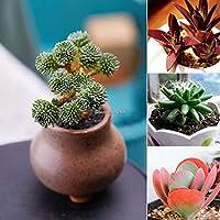 タイプ3:新しい素敵な愛らしい花の香りがよい花多肉植物種子C1My 03