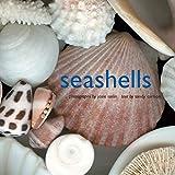 Seashells 画像