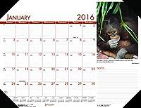 家のDoolittle 2016Monthlyデスクパッドカレンダー、Earthscapesコーストライン 22 x 17 Inches
