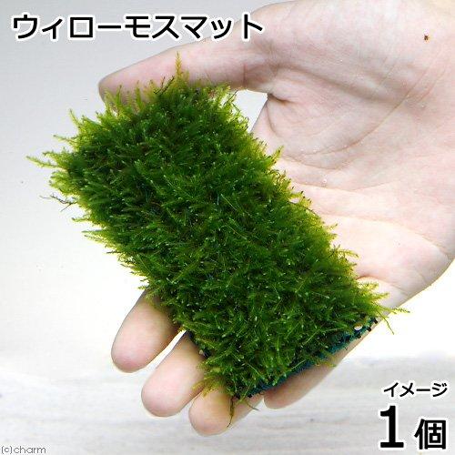 (水草)育成済 ウィローモスマット(無農薬)(1個) 本州・四国限定[生体]