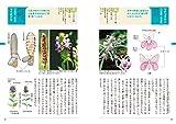 野草の名前 夏 和名の由来と見分け方 (ヤマケイ文庫) 画像