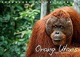 Orang Utans von Borneo Tierkalender 2019 (Tischkalender 2019 DIN A5 quer): Tierkalender der Orang-Utans von Borneo (Monatskalender, 14 Seiten )