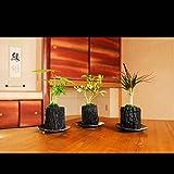炭花壇 観葉植物 3種セット ※陶器皿付き