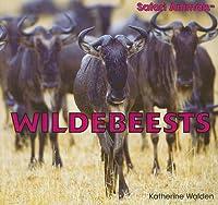 Wildebeests (Safari Animals)