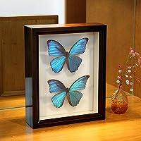 昆虫標本箱(ドイツ箱)製造30年の実績 ドイツ箱モルフォ蝶2頭入れ