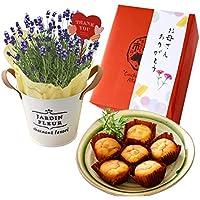 花由 母の日 ラベンダー リトルマミーの鉢花と選べるスイーツのセット(ラベンダー鉢植え+なると金時スイートポテト)