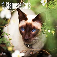 Siamese Cats 2018 Wall Calendar [並行輸入品]