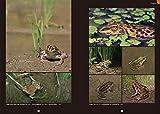 日本のカエル: 分類と生活史~全種の生態、卵、オタマジャクシ (ネイチャーウォッチングガイドブック) 画像