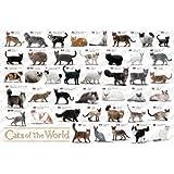 1000ピース ジグソーパズル めざせパズルの達人 (ペット?コレクション) 世界の猫図鑑 (50x75cm)