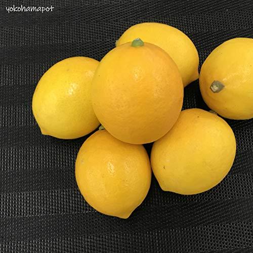在庫限りの特価価格(国産メイヤー レモン 佐賀県産 10kg)Mサイズ 約90g/玉 マイヤーレモン 青果
