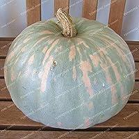 多色カボチャ盆栽オーガニック野菜の栄養食品NON-GMO食用盆栽の家の庭10個/袋の場合:12