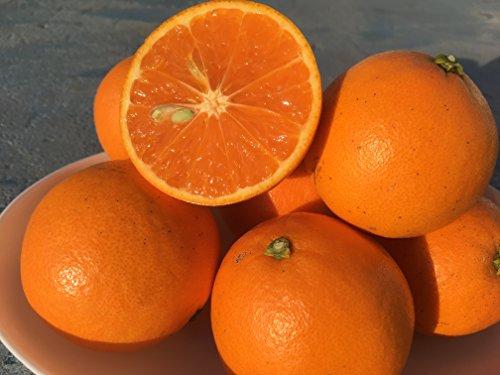和歌山県産 ありあけオレンジ みかん 5キロ サイズS~L ご家庭用(ネーブルオレンジとスペイン原産のオレンジクレメンティンの掛け合わせ)