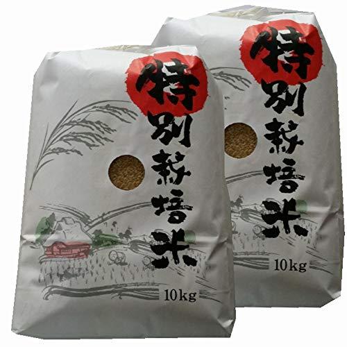 令和元年 熊本県 天草地方産 こしひかり 特別栽培米 玄米 10kg×2袋(20kg 業務用)